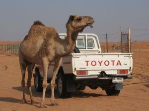 期間工とラクダとトヨタ