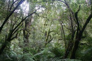 ジャングルでも生きていける